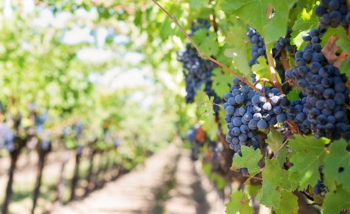 SSU survey shows majority of locals have positive perceptions of Wine Industry