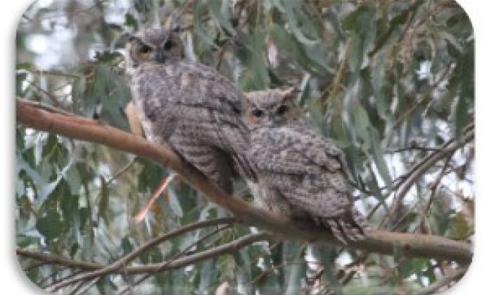 "Michael Stoyka, ""SSU Owls"""